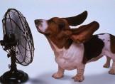 Cane con ventilatore
