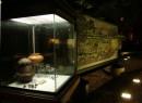 Una vetrina del percorso archeologico della Corte 9