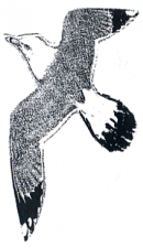 L'Arte dell'Ascolto - logo gabbiano