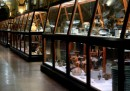 Museo Archeologico. Video in LIS