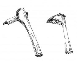 Il Neolitico: l'ascia e il falcetto