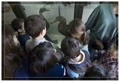 Al Museo di Zoologia