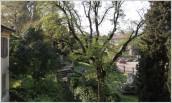 Il giardino visto dagli uffici di Casa Carducci