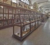 Museo Civico Archeologico, sezione etrusca