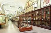 Museo Archeologico, Sezione Etrusca