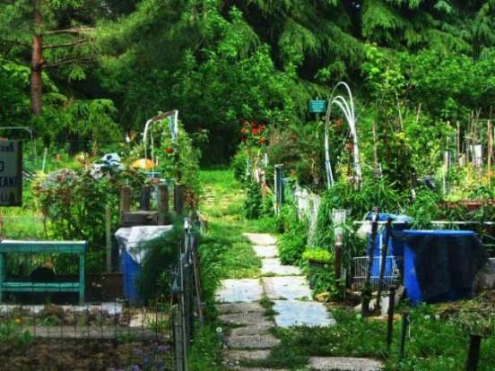 Balconi, terrazzi e piccoli orti : l\'orto di casa a portata di mano ...